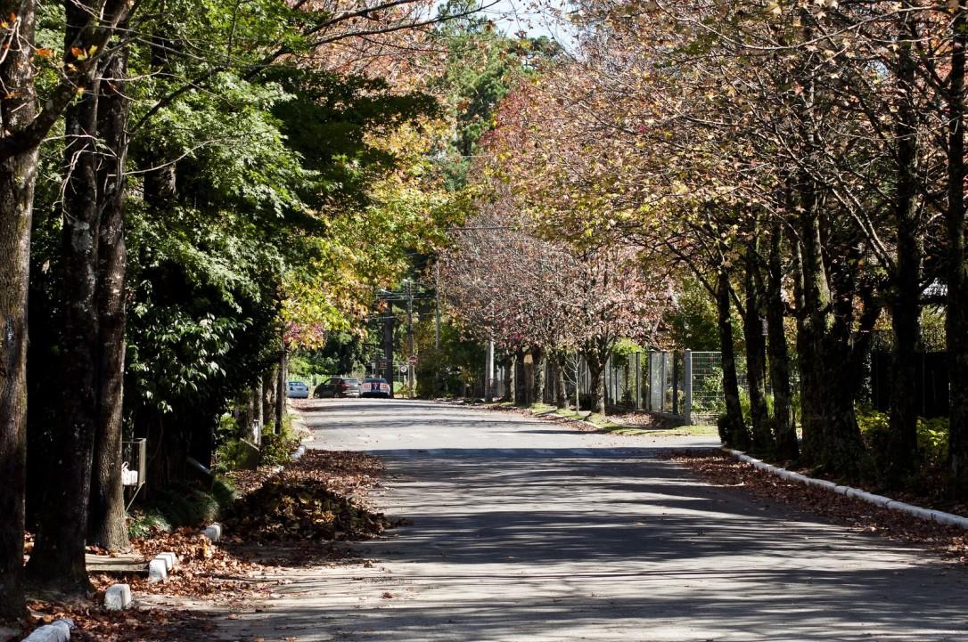 autumn-2694622-1920.jpg